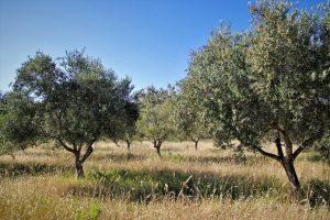 frangos-e-espargos-juntos-para-o-bem-deles-e-da-oliveira-sera-discutido-em-21-de-abril.